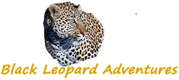 Black Leopard Adventures